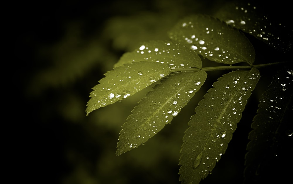 green leaves with water dew