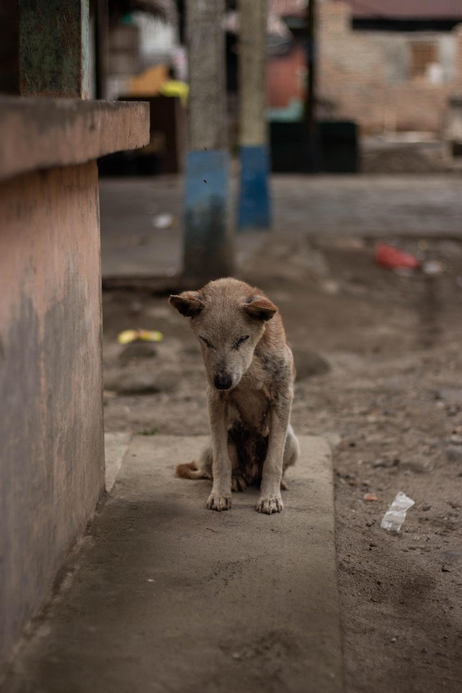 gray dog on sidewalk