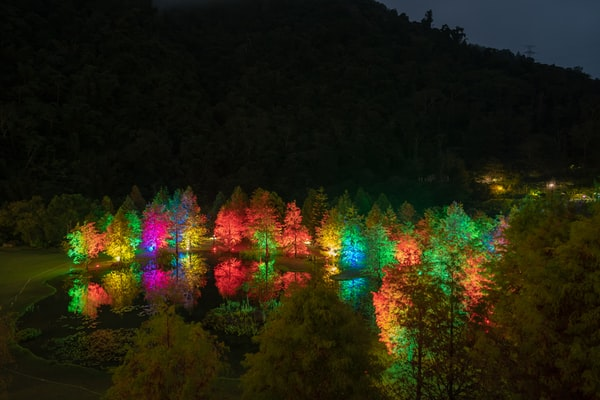 colorful trees at night by @winstonchen, unsplash