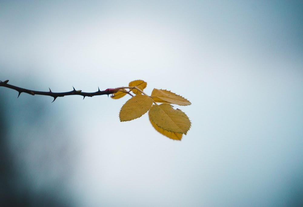 selective focus photography of leafed tree