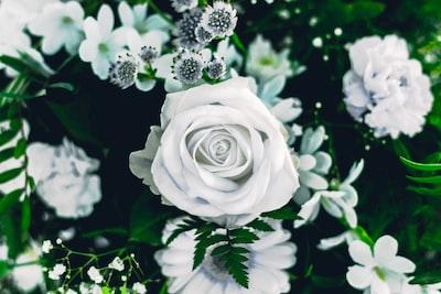 biale-kwiaty-roze