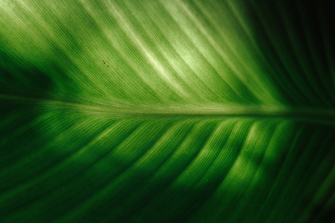 Ode to Nature's Perfection - A Leaf's Structure