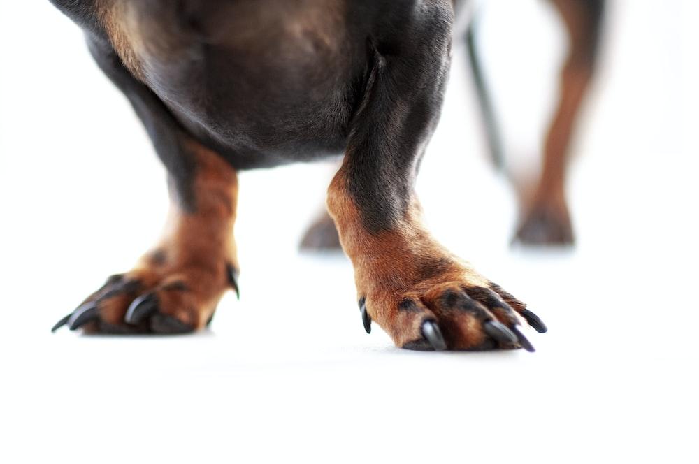 tan dog feet