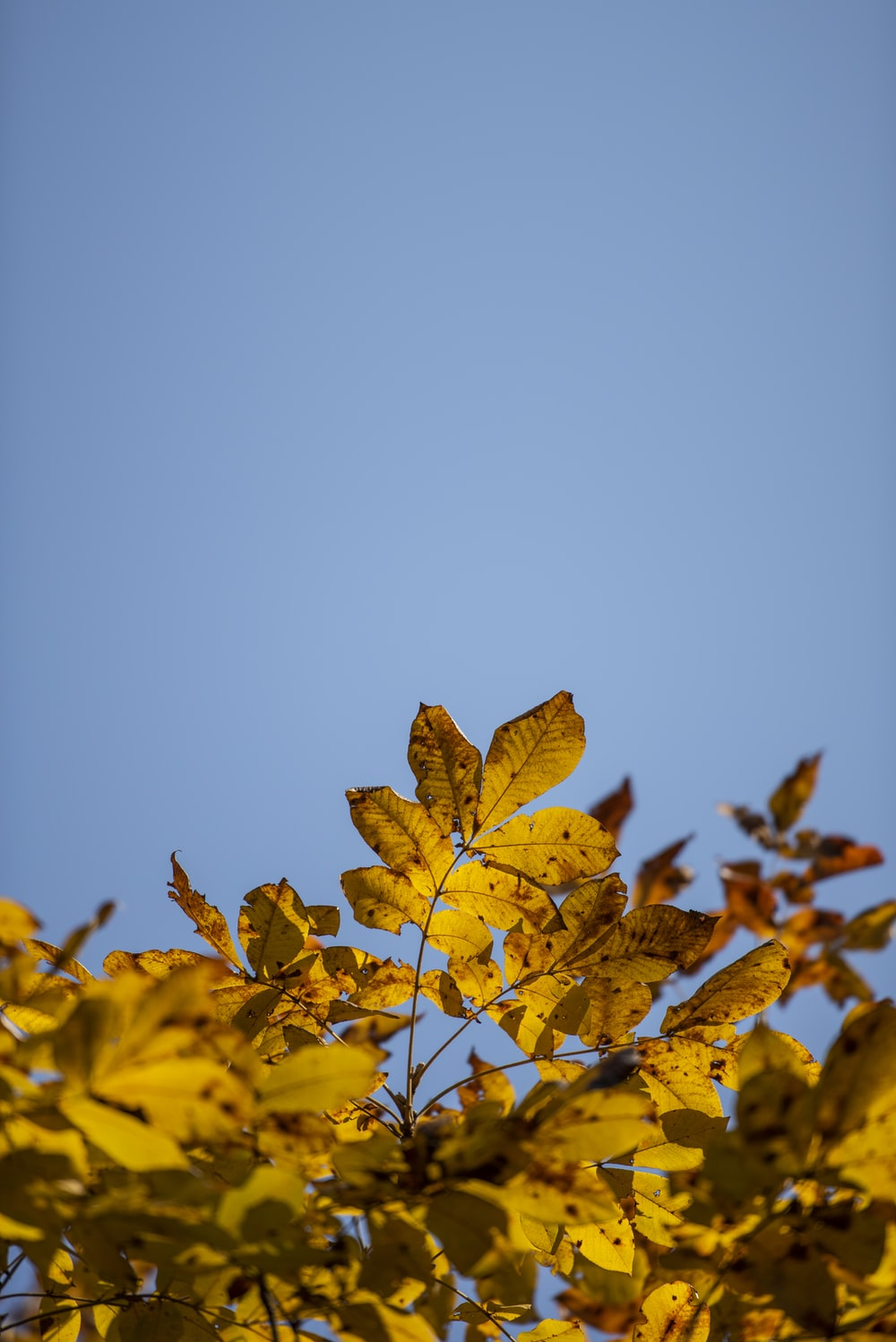 view of yellow leaves