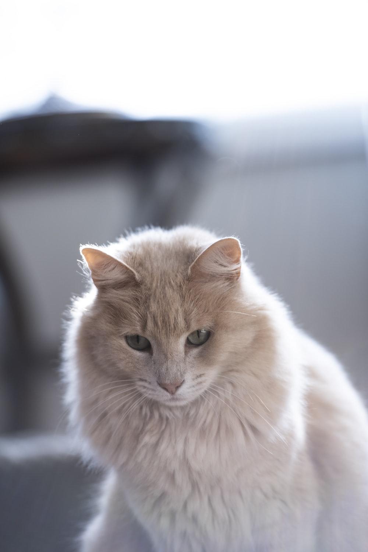 focus photography of orange cat