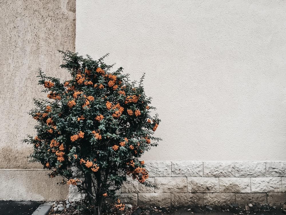 orange and green petaled flower near white wall
