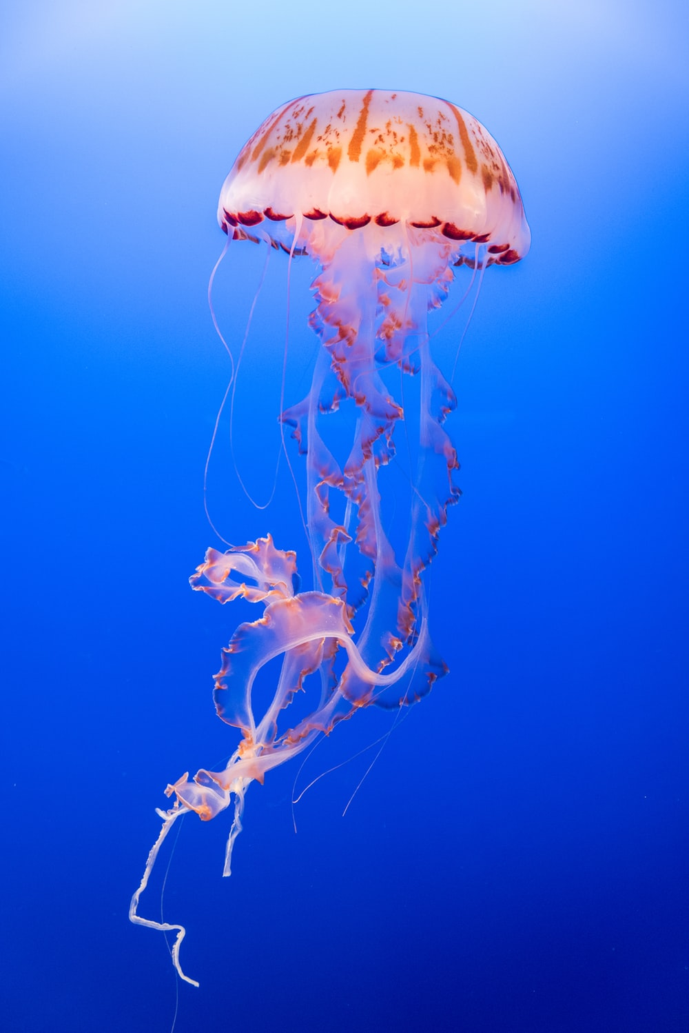 pink and orange jellyfish
