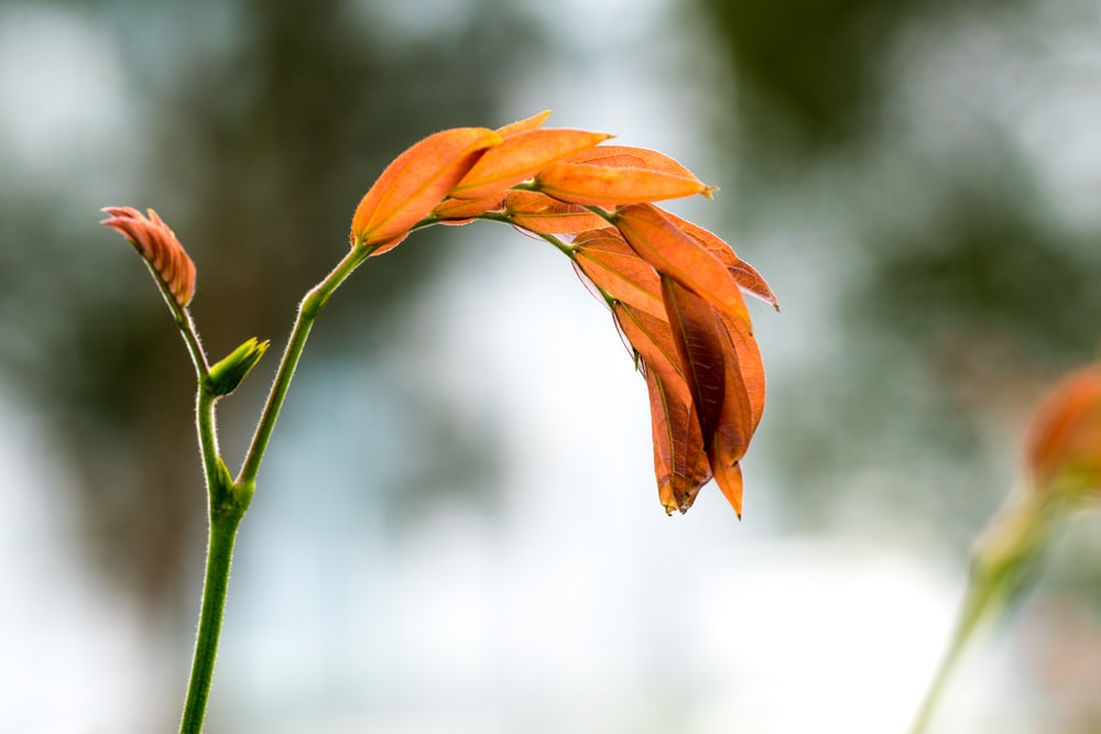 selective focus photography of orange-petaled flower