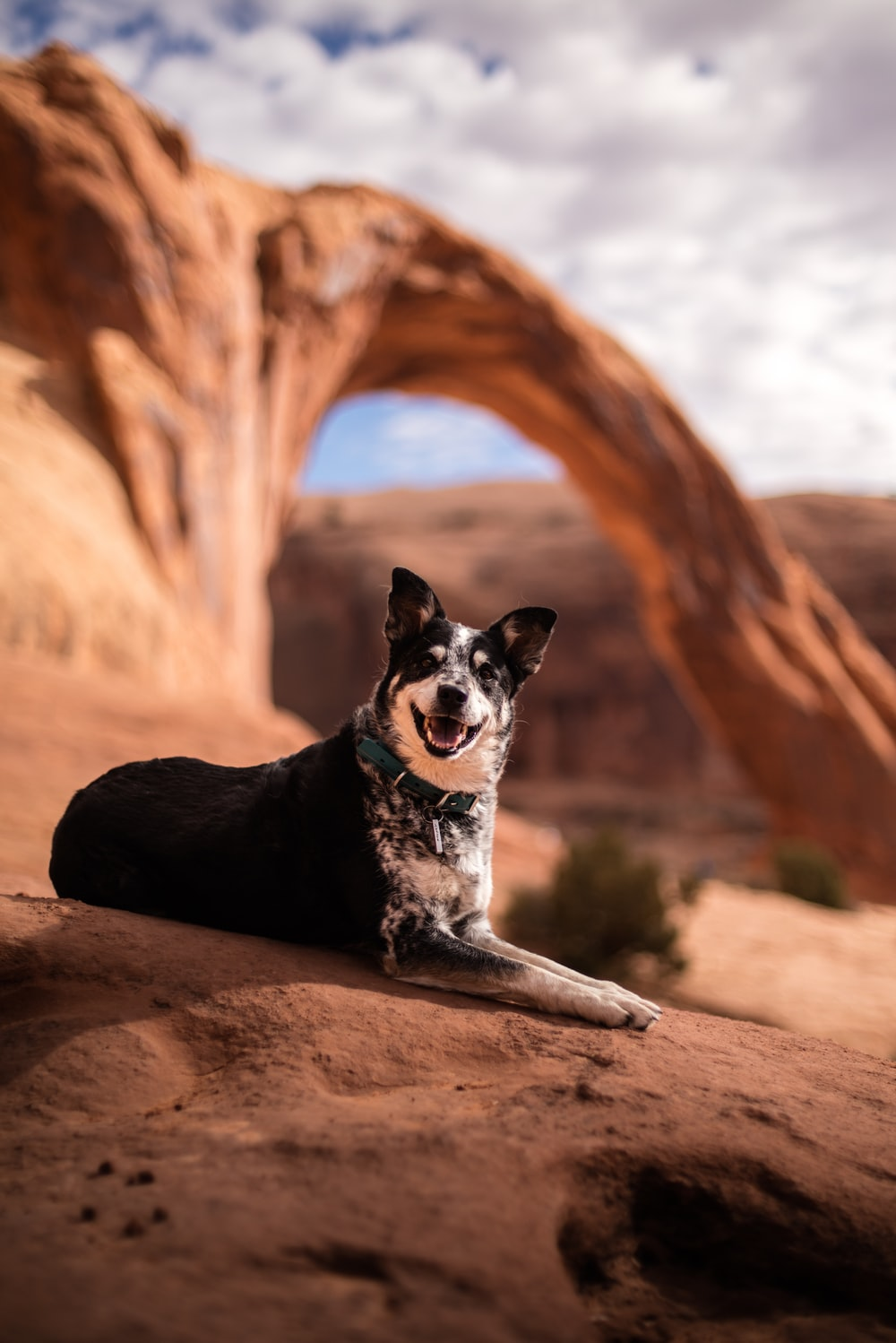 selective focus photography of black and white dog