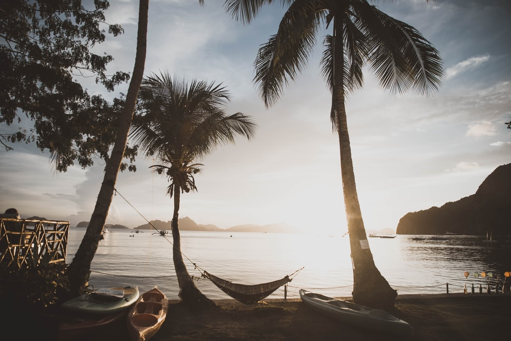 hammock hung on palm trees at the shore during day