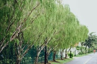 green trees and green trees