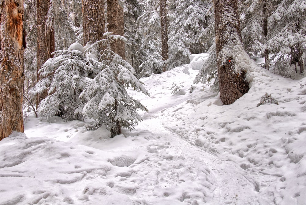 low angle photography of snow-covered forest