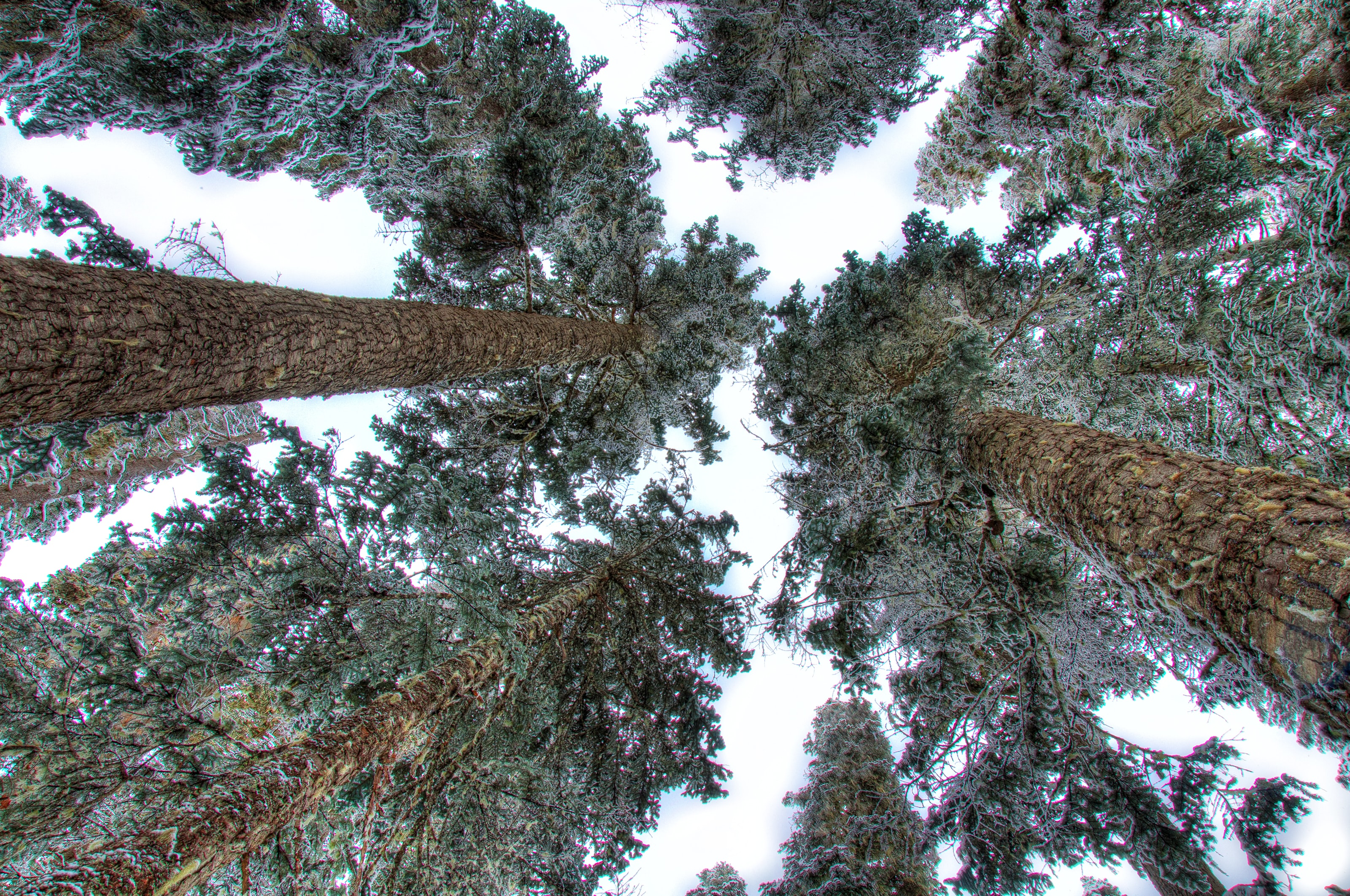 bottom view photography of trees