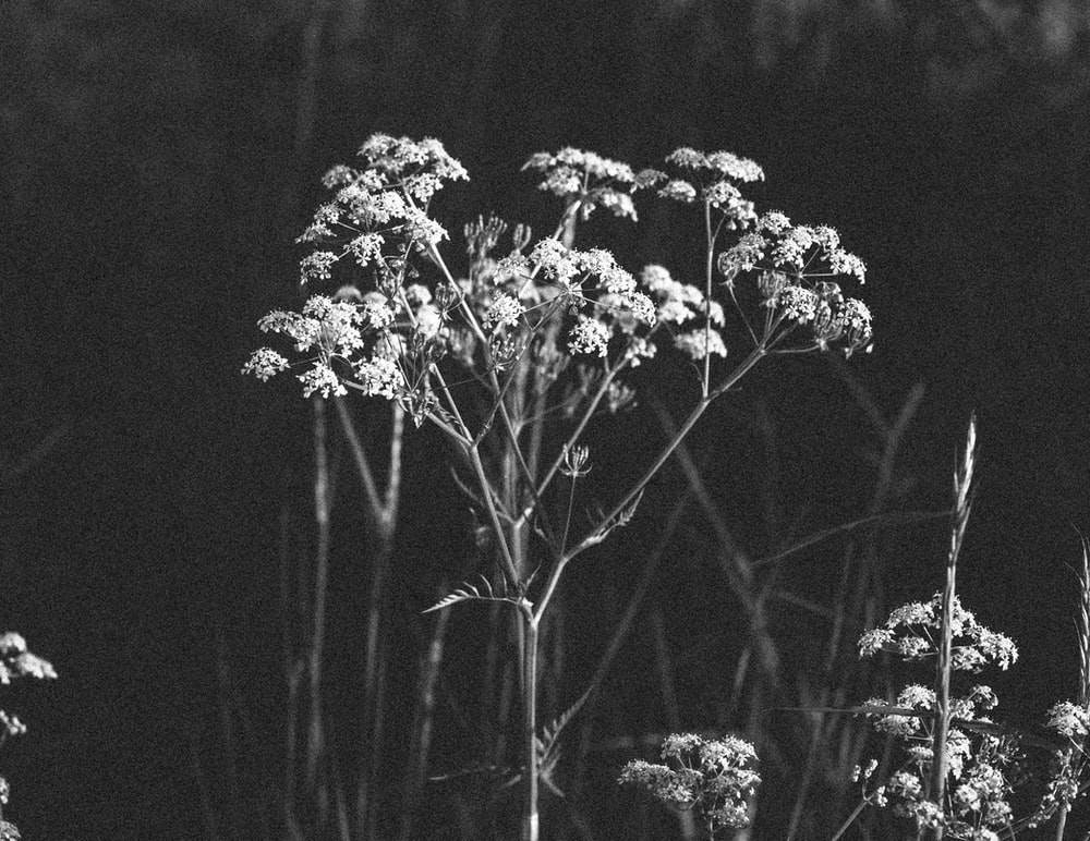 500 Black And White Flower Pictures Hd Download Free
