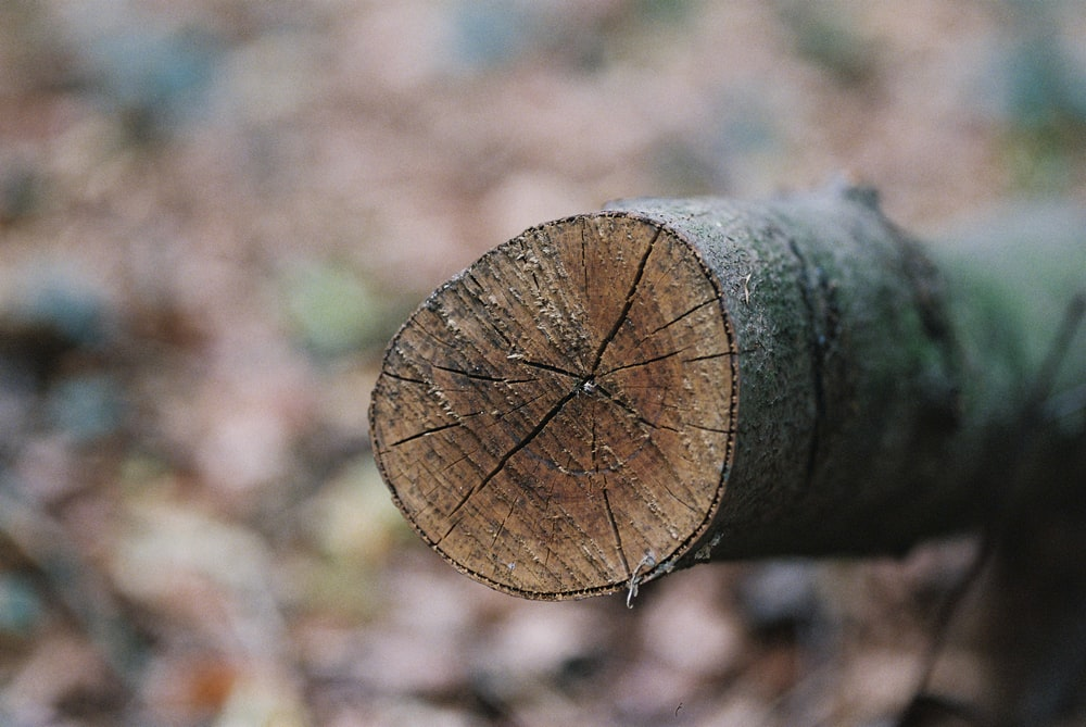 selective focus photography of wood log