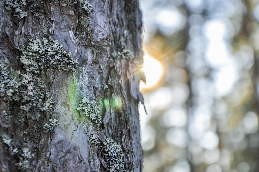 macro photography of tree bark