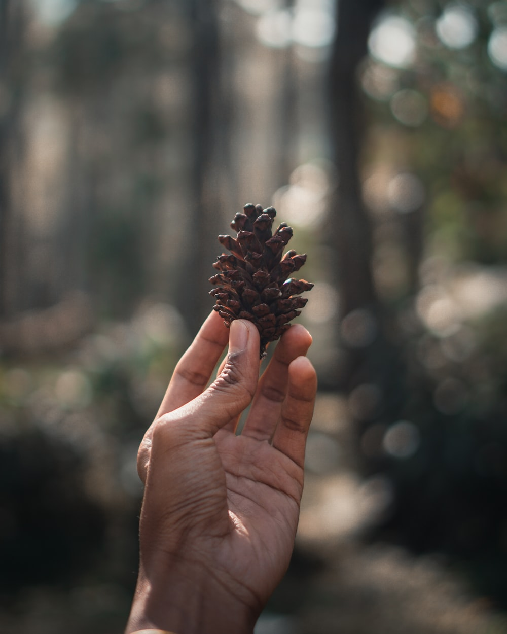 person holding pinecone