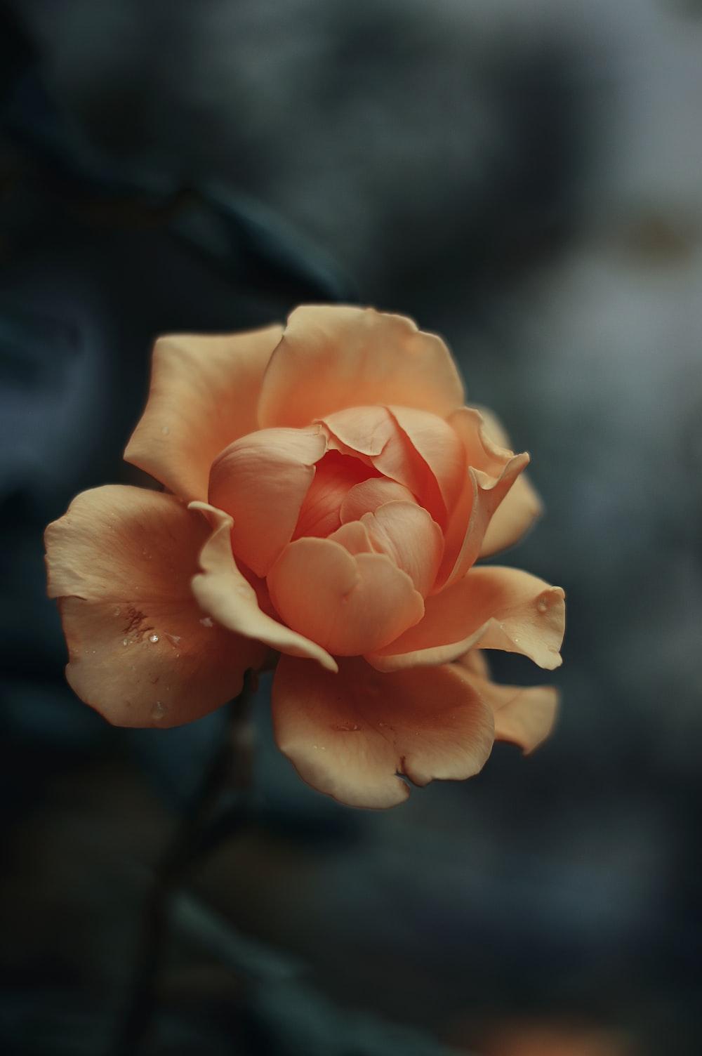 close-up photography orange petaled flower