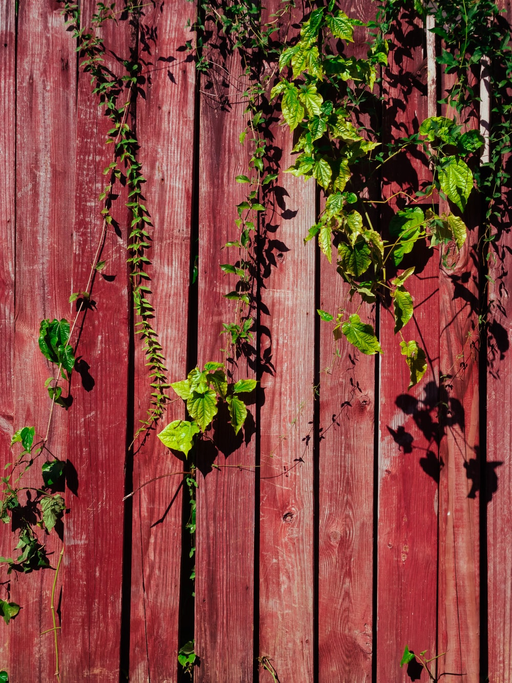 green-leaf plants on fence