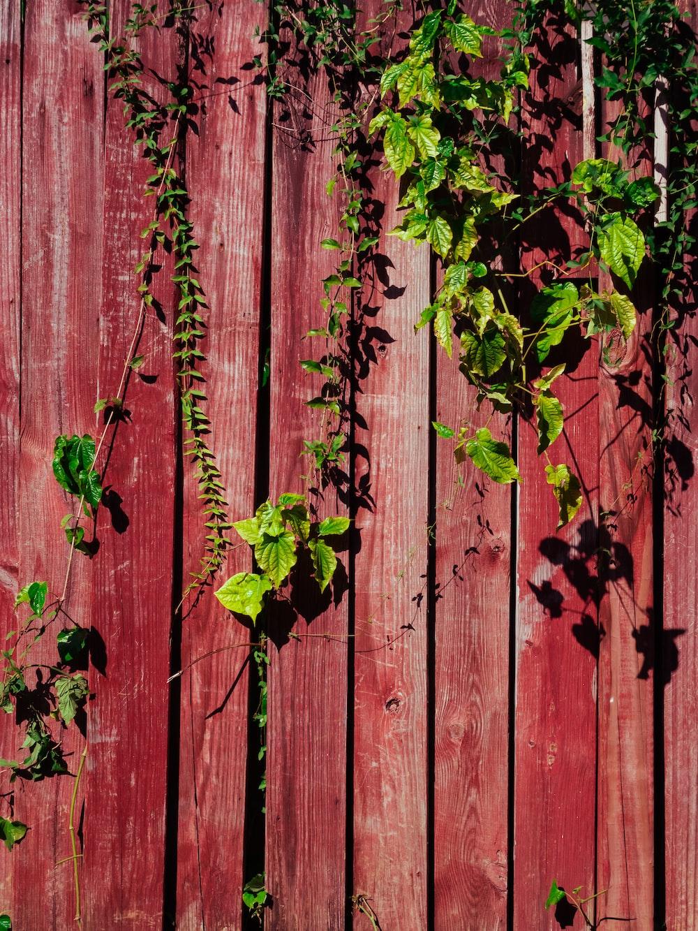 green-leaf plants on fence