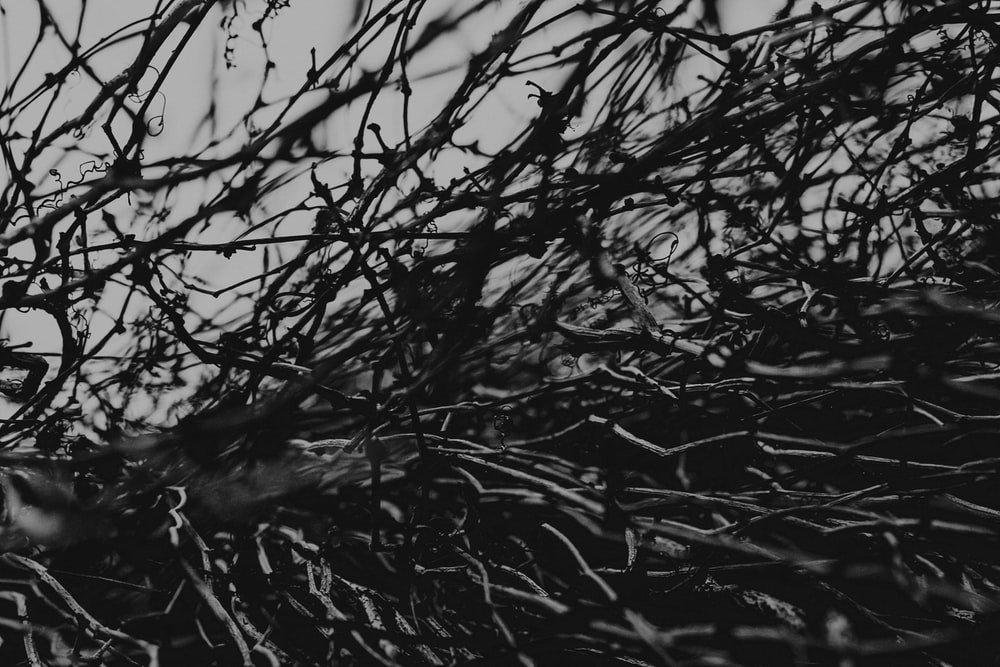grayscale photography of twigs