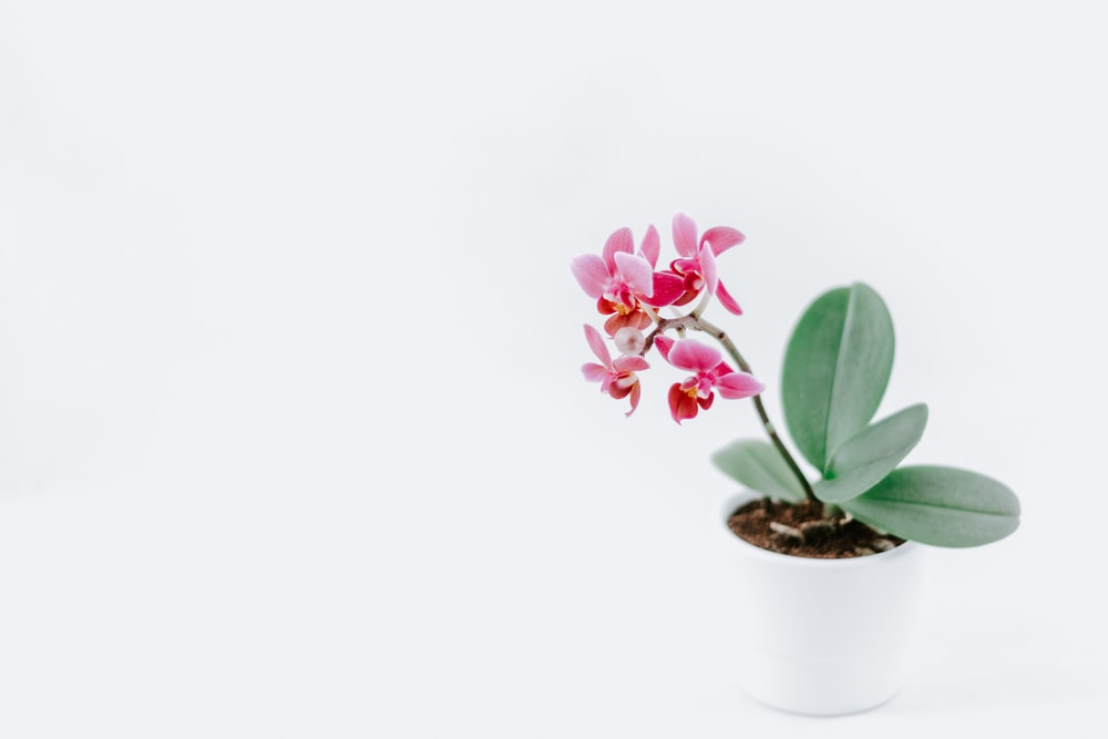 pink petaled flwoer