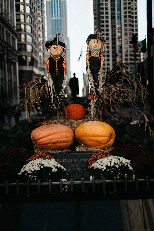 orange pumpkin photography
