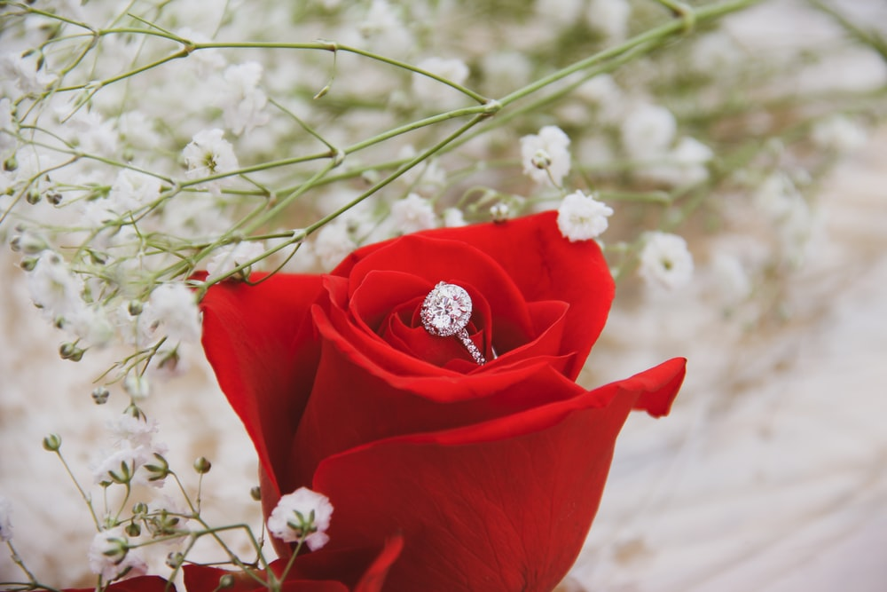 silver-colored ring on top of rose