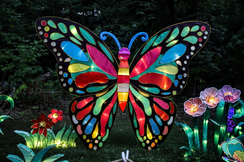 multicolored butterfly and flowers decors on lawn