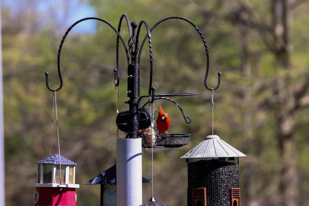 selective focus photography of orange bird
