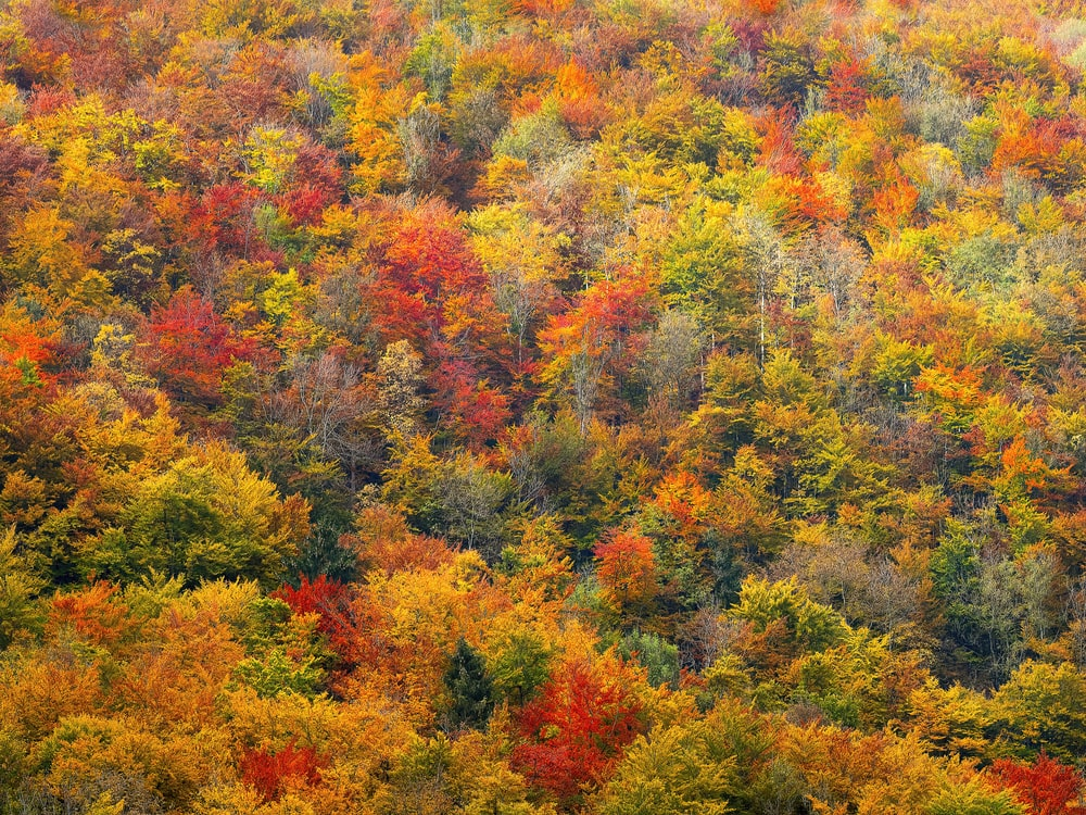 bed of green-and-red-leafed trees