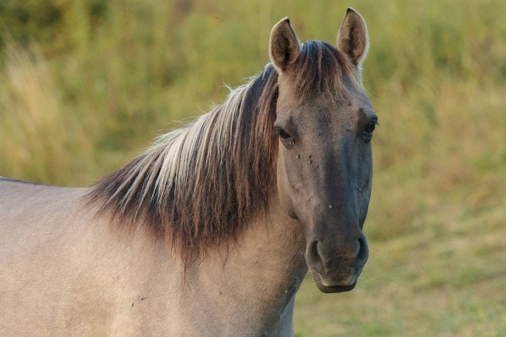brown horse on grass