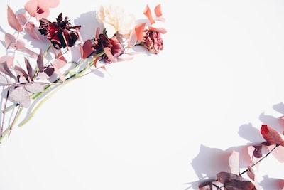 red petaled flower floral teams background