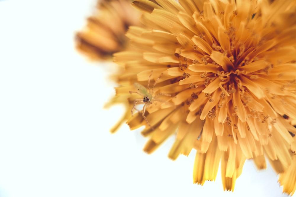 petaled of yellow flower