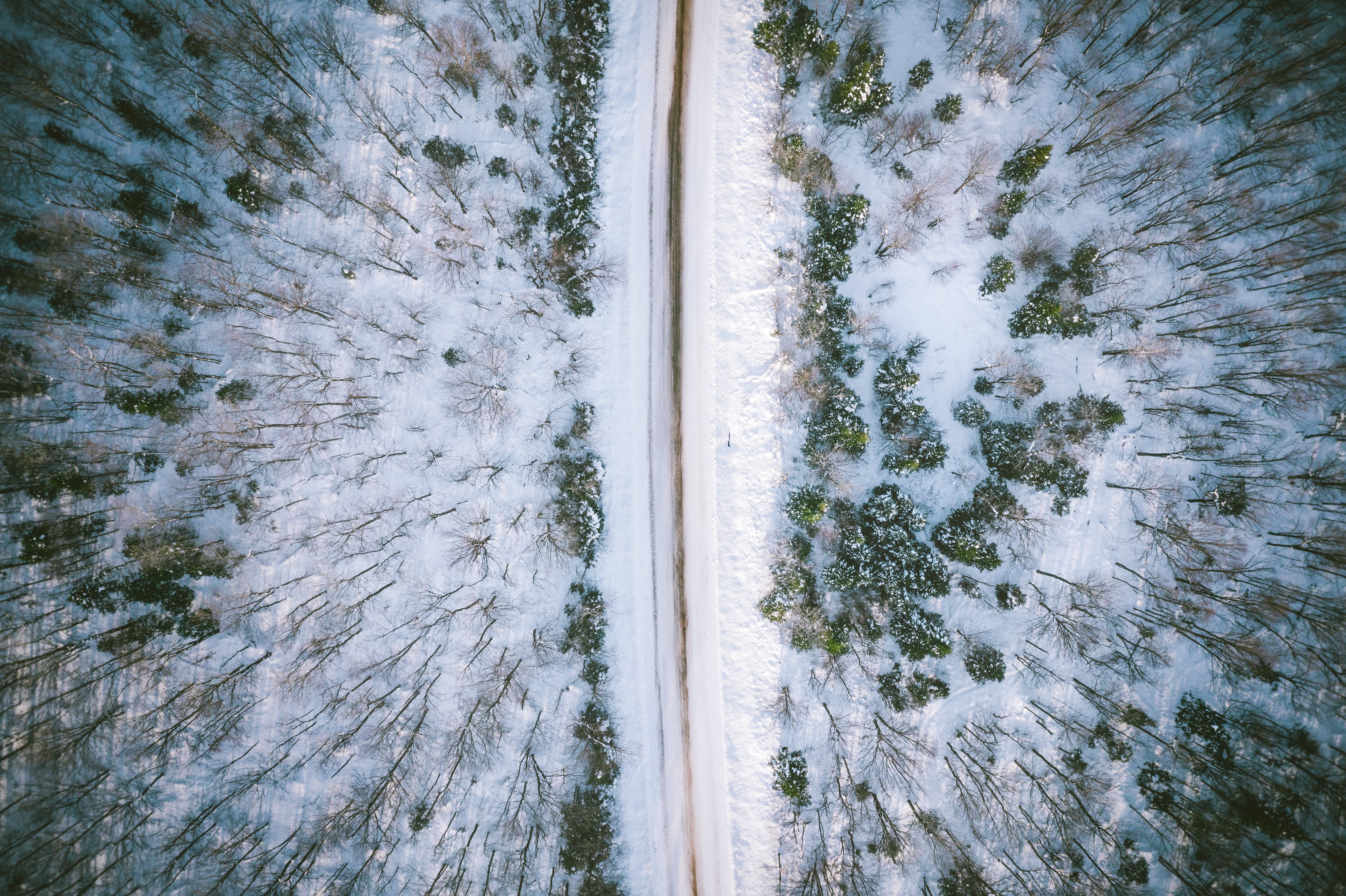 aerial photo on snow covered road in between trees during daytime