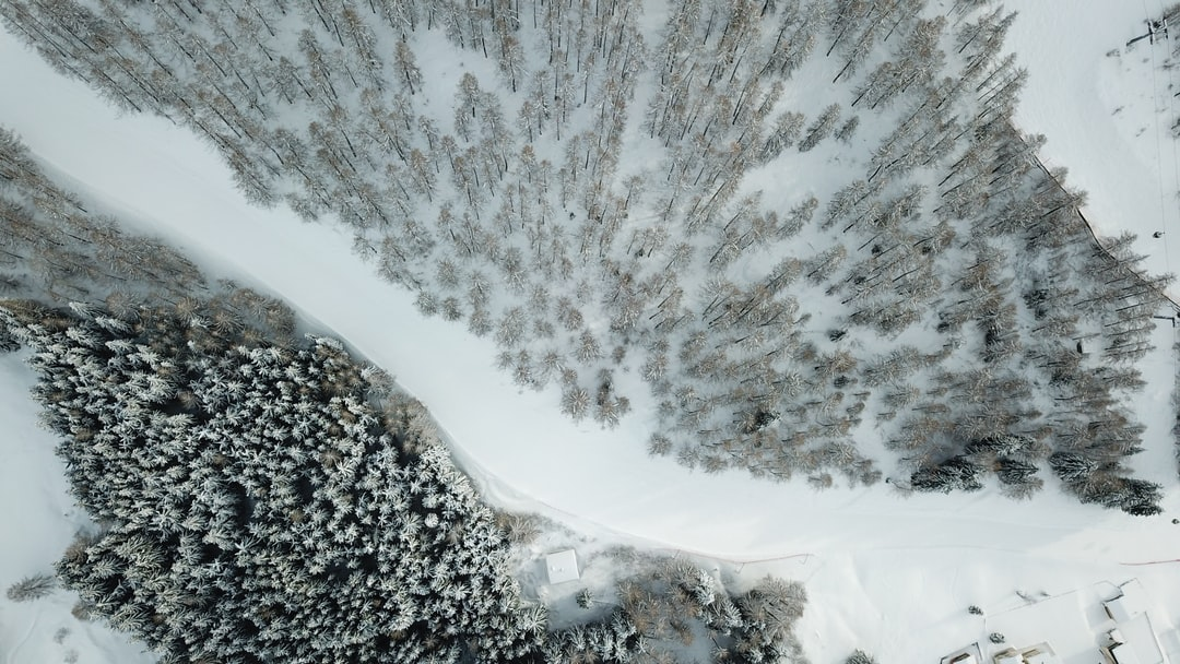 Snow-covered trees from above.