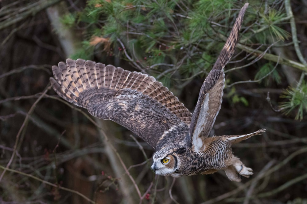 brown and grey owl flying near tree
