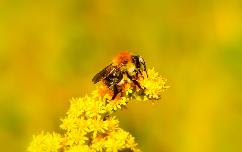 worker bee perched on flower during daytime