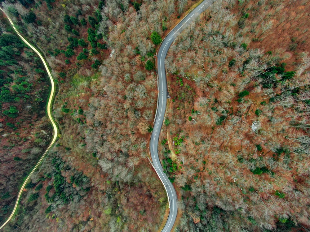 areal photography of concrete road between trees