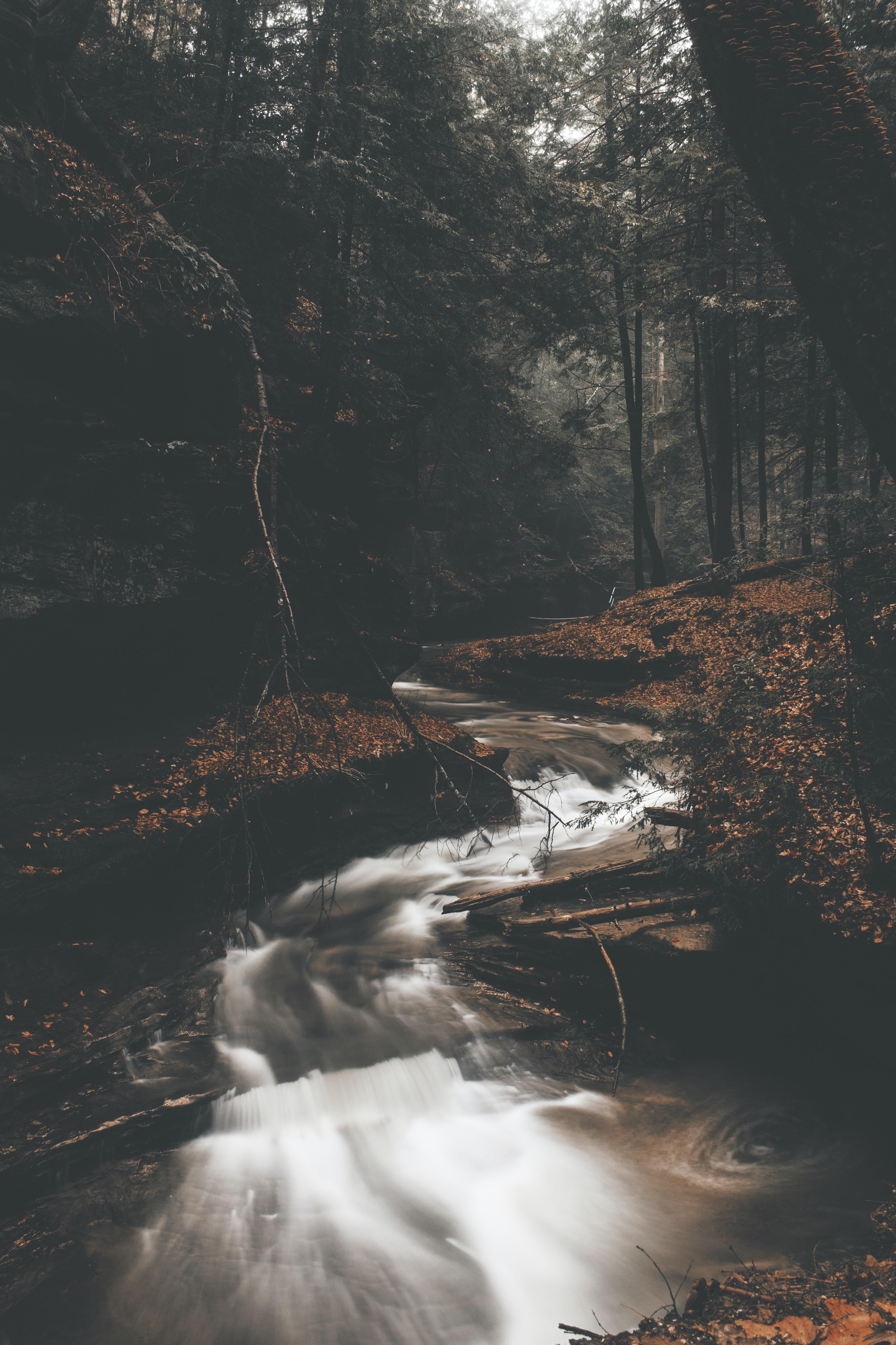 running water between trees