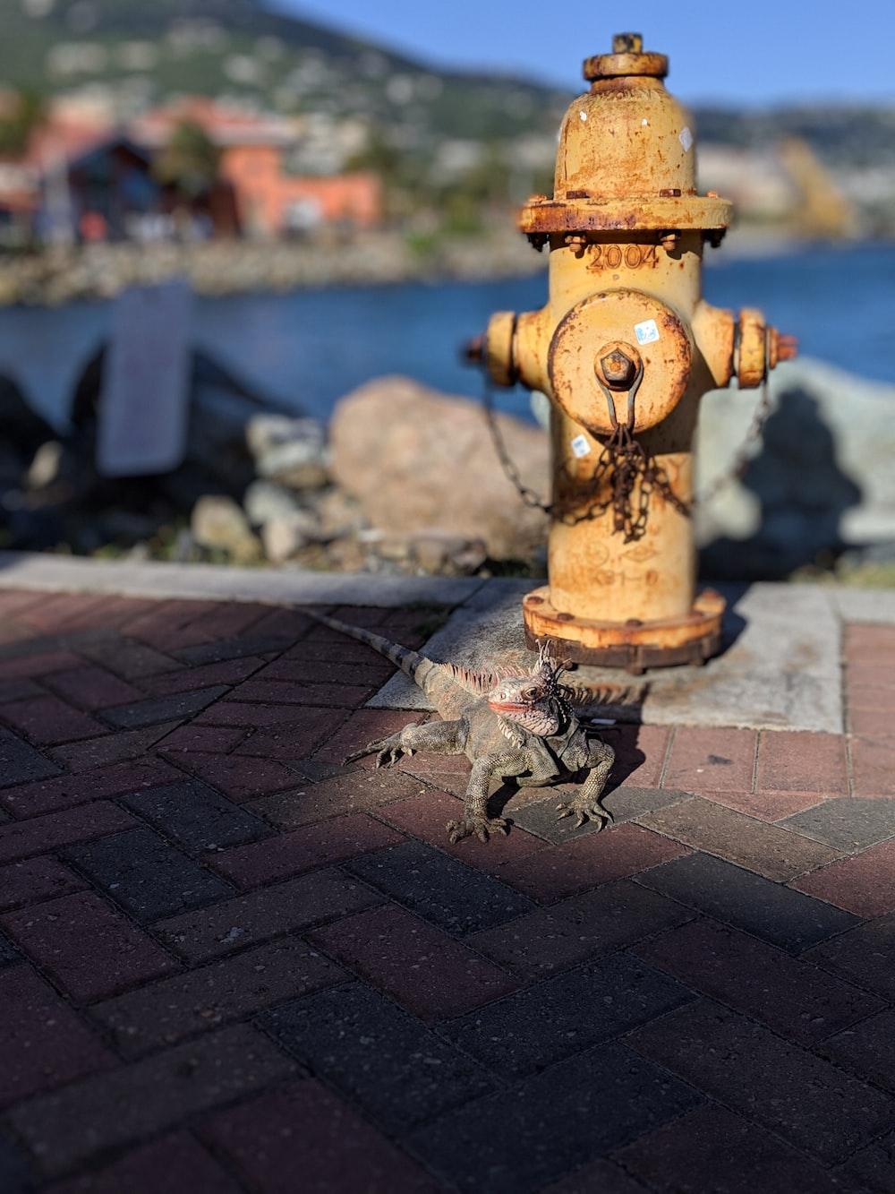 lizard next to fire hydrant