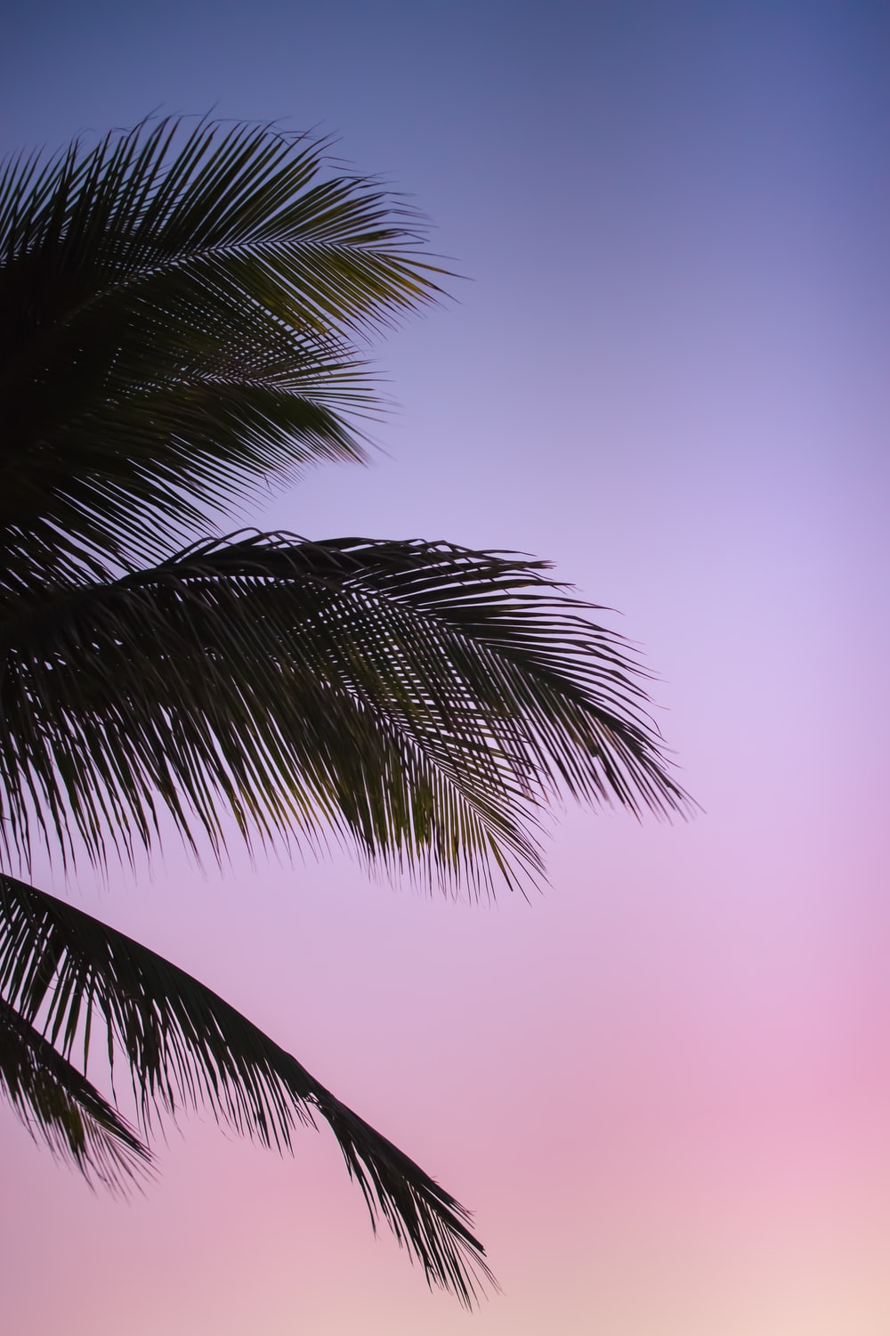 green coconut palm under blue sky