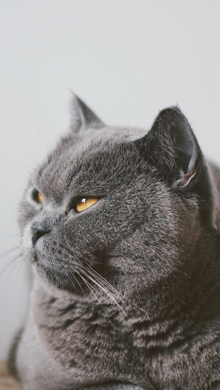 black and gray fur coat