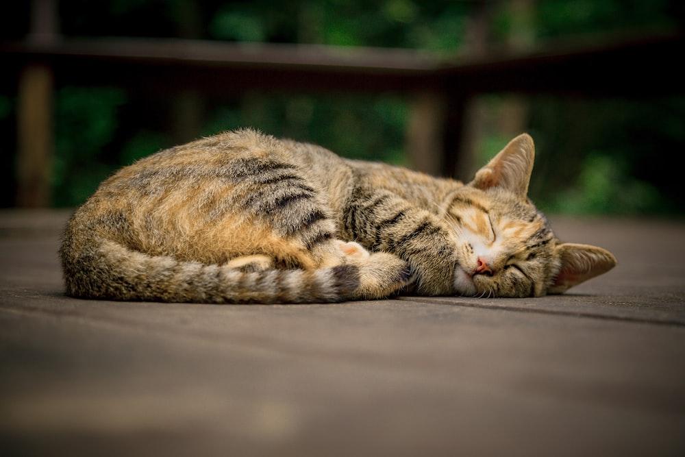 gray and orange tabby cat on floor whitel sleeping