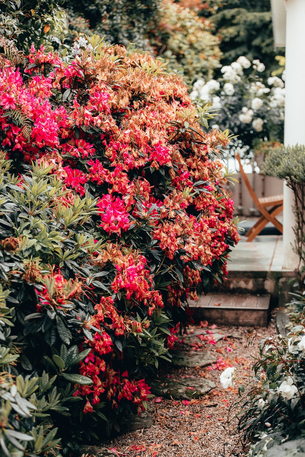 red and white flower plants during daytime