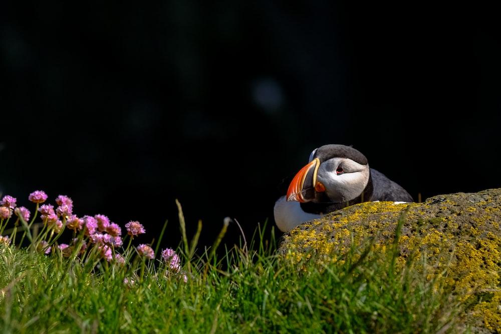 bird on the grass field photography