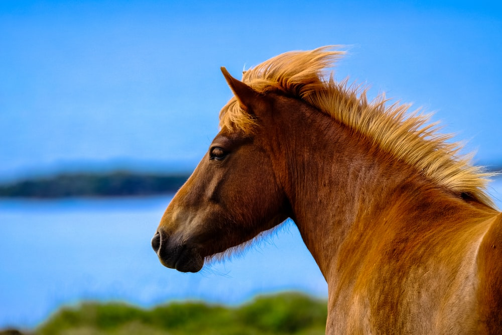 brown horse close-up photography