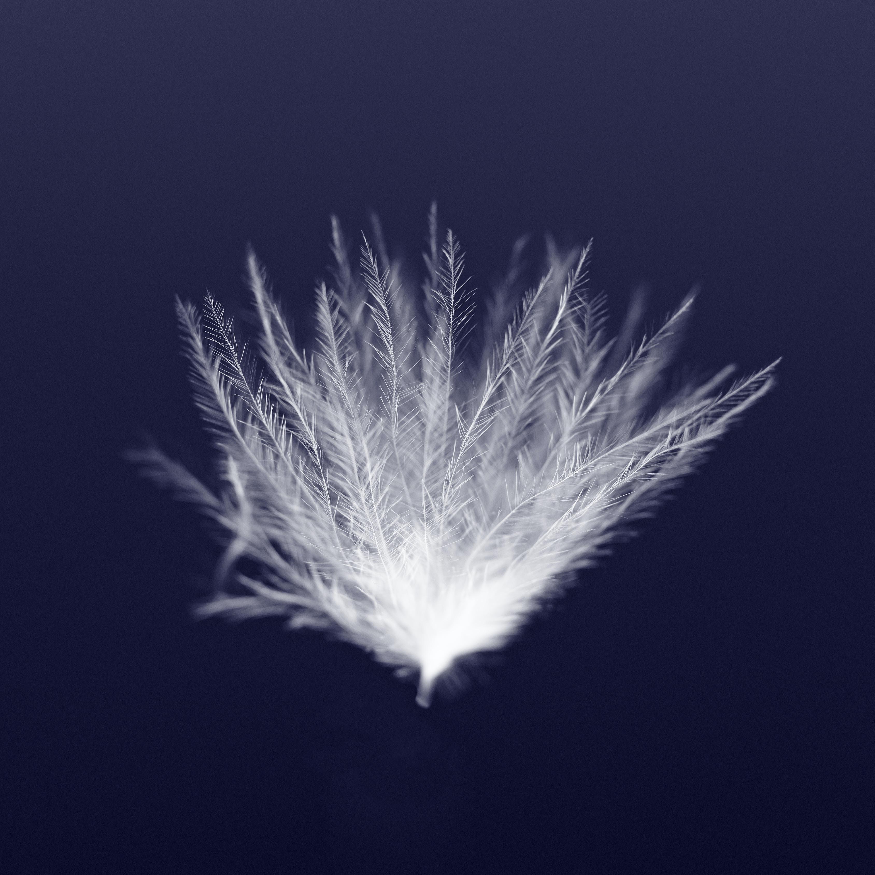 macro photography of white leaf