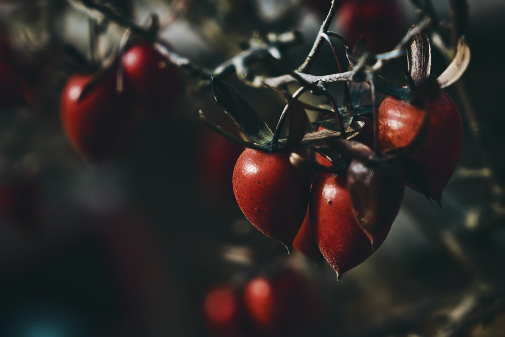 closeup photography of red fruit