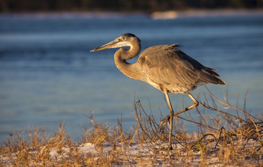 brown heron near body of water